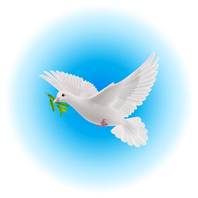 dove_white